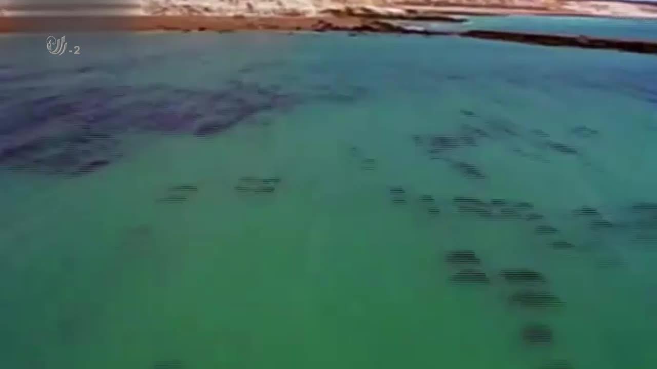 虎鲸捕食海狮,它们沿着涨潮的水道进入捕猎渠道,然后发起进攻