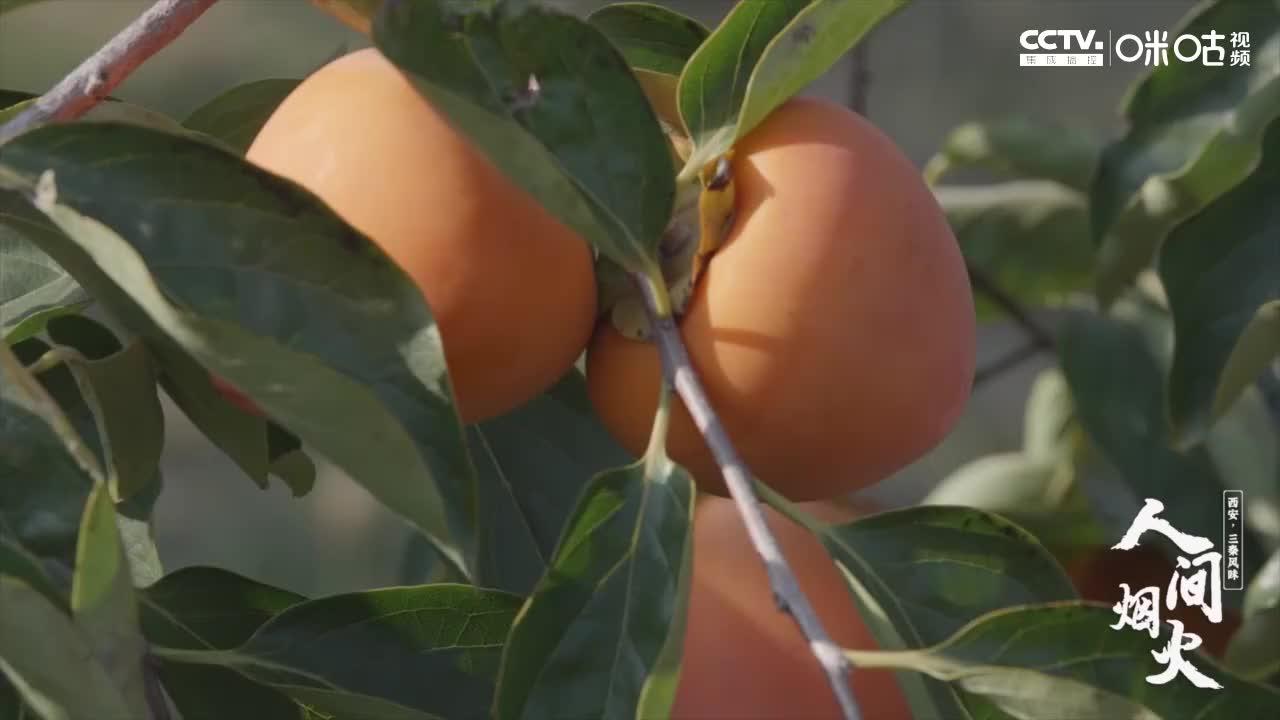 """果肉晶莹剔透,富平尖柿被誉为""""柿中珍品"""",到底有何独特之处?"""