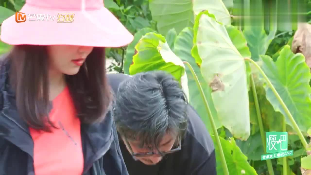 李湘为减肥豁出去了,大中午挖芋头差点中暑,王岳伦举动太暖!