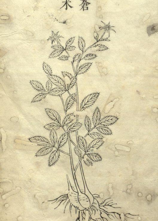 草木研究,古籍善本《草木谱》线描欣赏