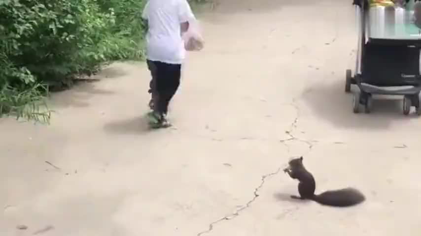 小宝宝喂了一下小松鼠接下来小松鼠就追着宝宝跑太可爱了