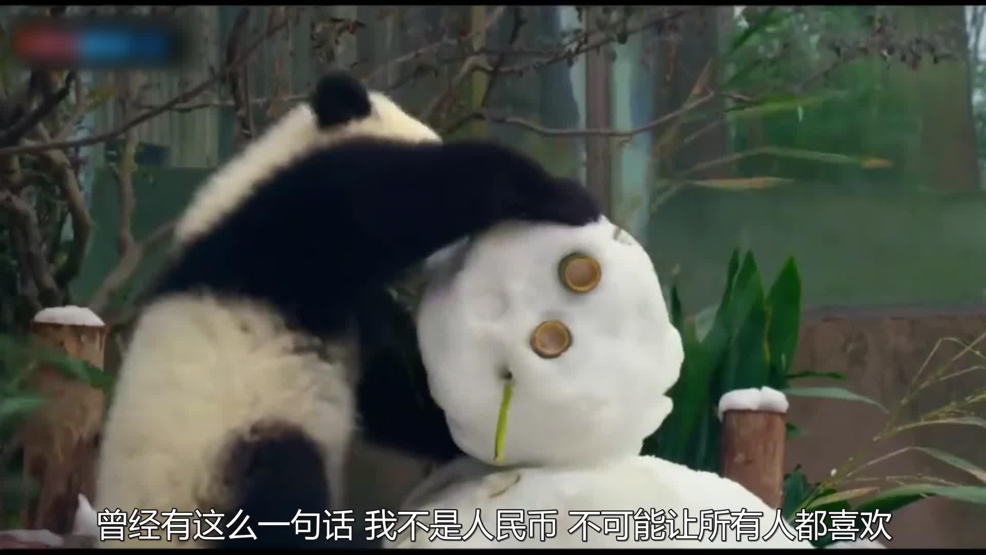 竹子哪里都有,可熊猫基地为啥建在四川?只因四川下手速度太快!