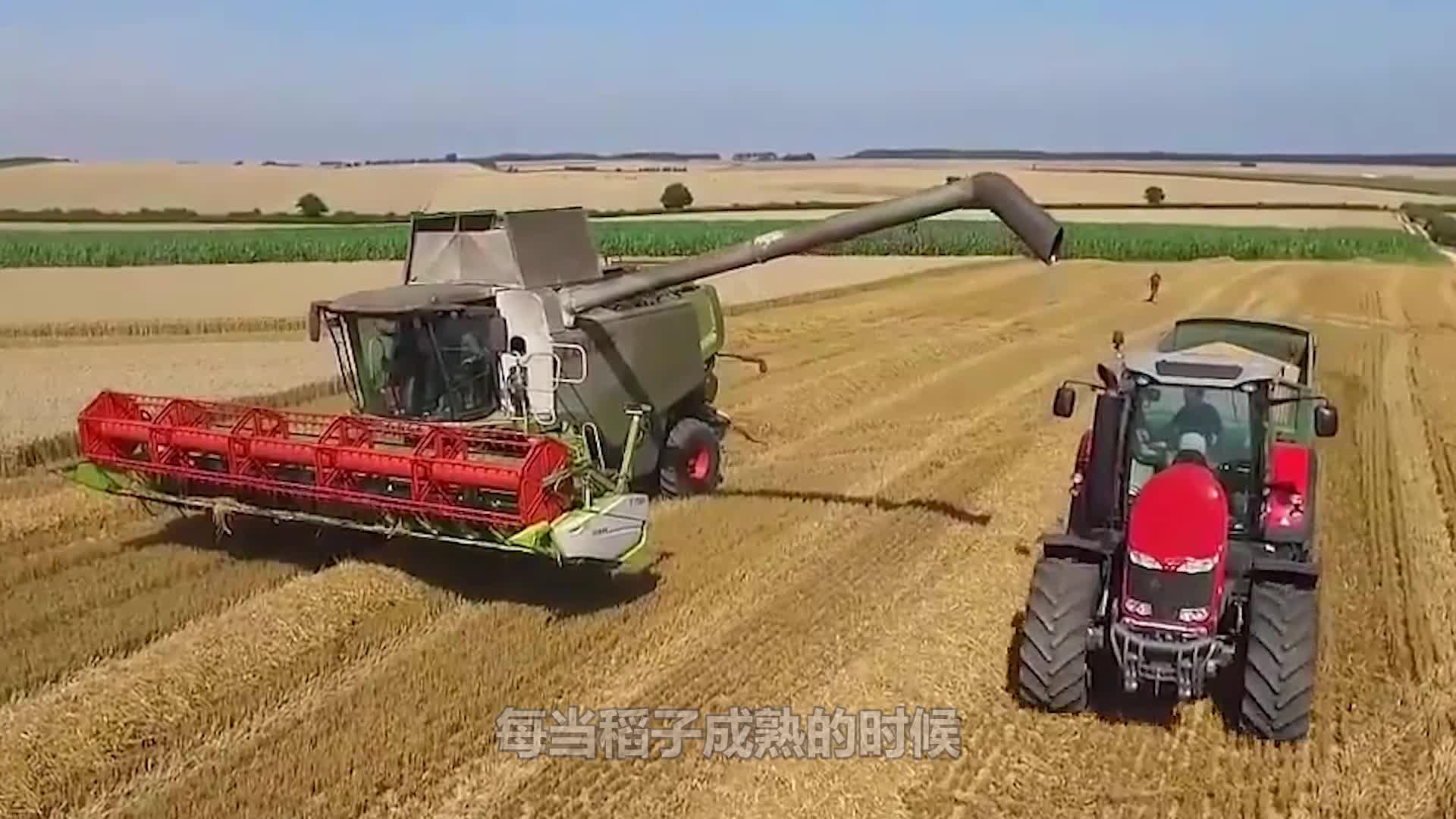日本是这样收稻谷的,百亩稻田一个人,大米装袋拉链一拉就装车