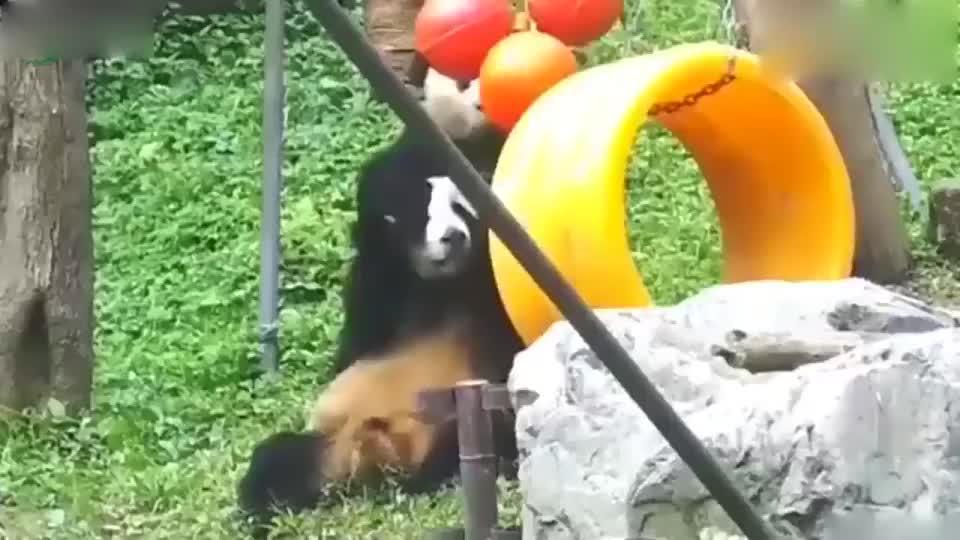 大熊猫的塑料兄弟情!因为达不成共识,结果谁也没玩到