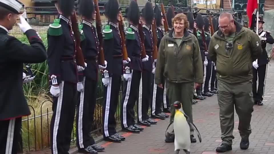 """全世界最牛的企鹅,拥有""""男爵""""封号,士兵见到它都要行军礼!"""