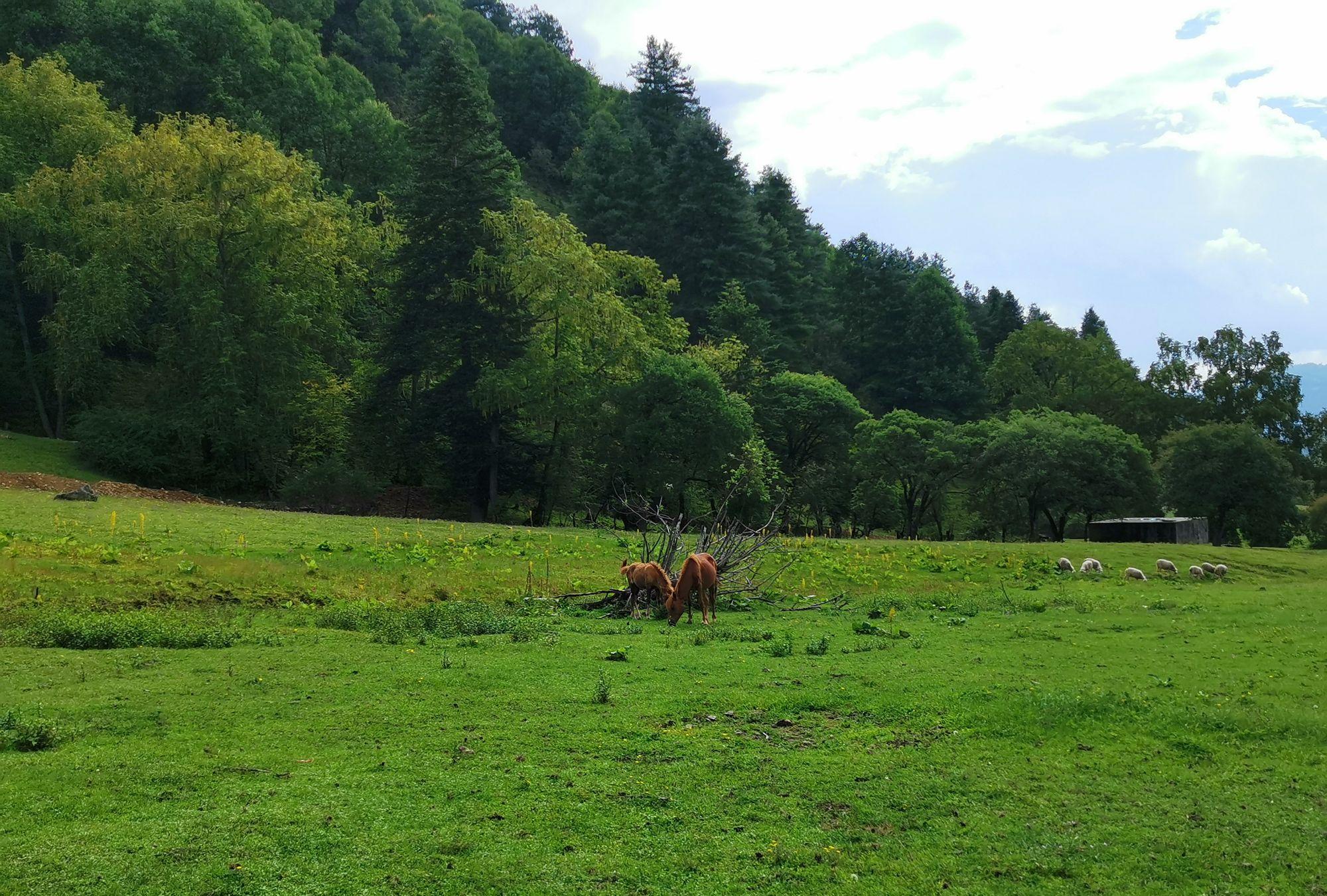 滇西高原牧场的美景,罗古箐风景区被称为东方新西兰,太美了
