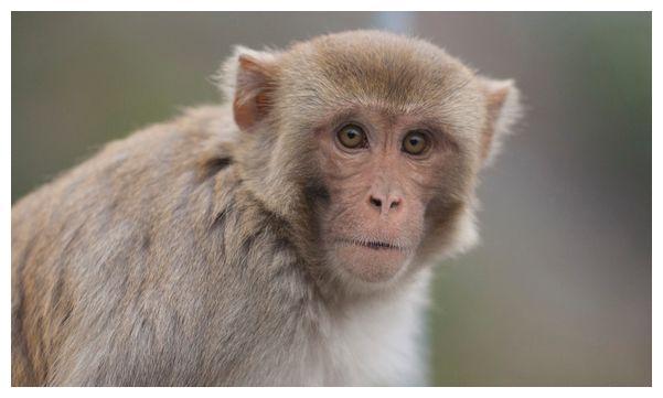 """生肖猴:多长个心眼,11月1日特别重要,是你人生最大""""转折点"""""""