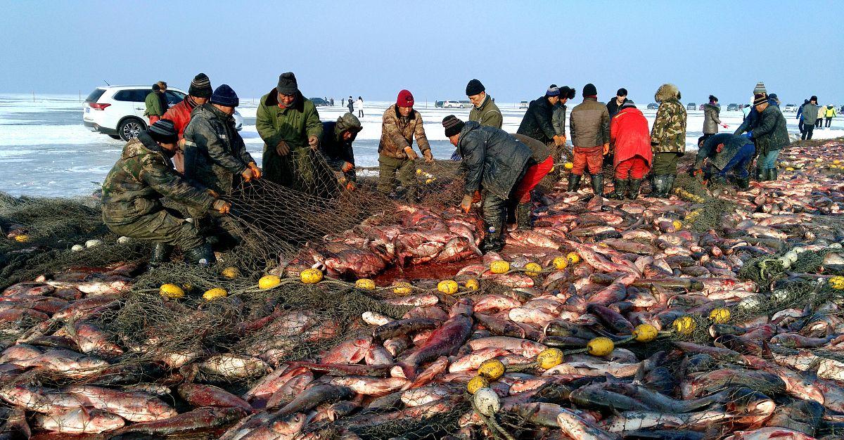 查干湖冬捕—一网最多十几万斤