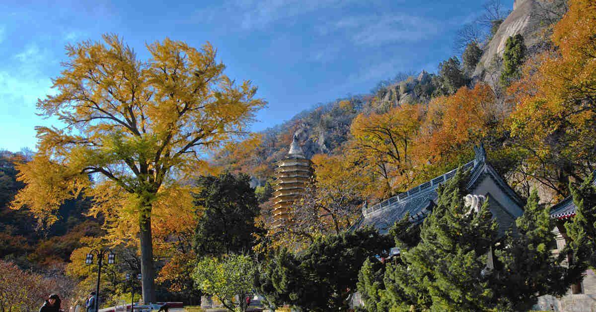 它是国家重点风景名胜区,也是京东第一山,它就是盘山风景区