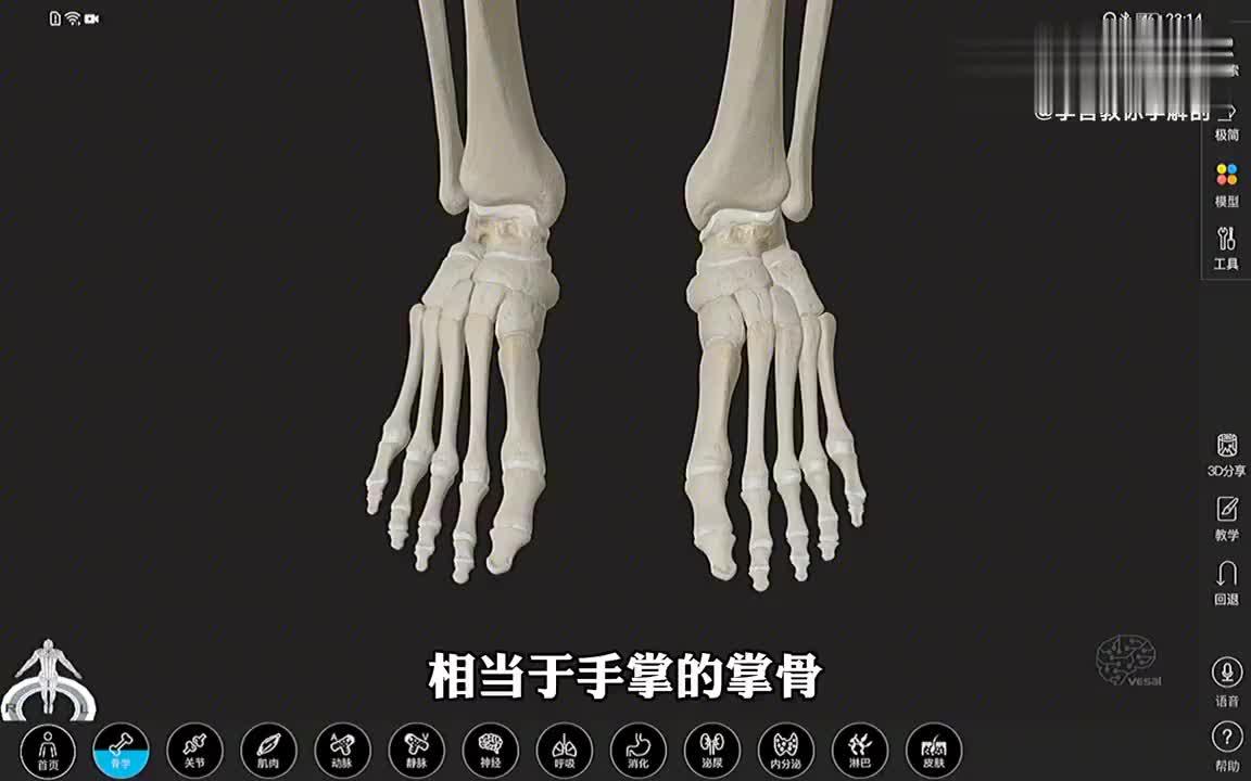 解剖大师 跖骨的3D解剖