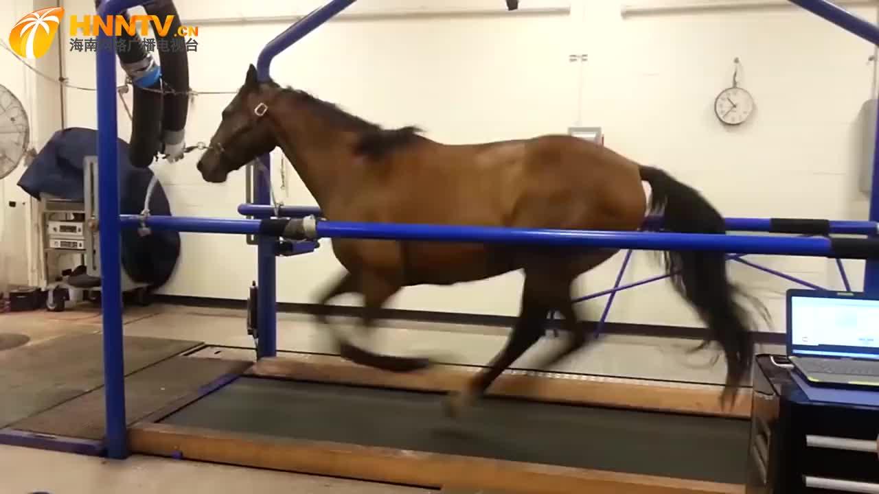 马在跑步机上奔跑,用实力告诉你什么是速度,简直要飞起来了