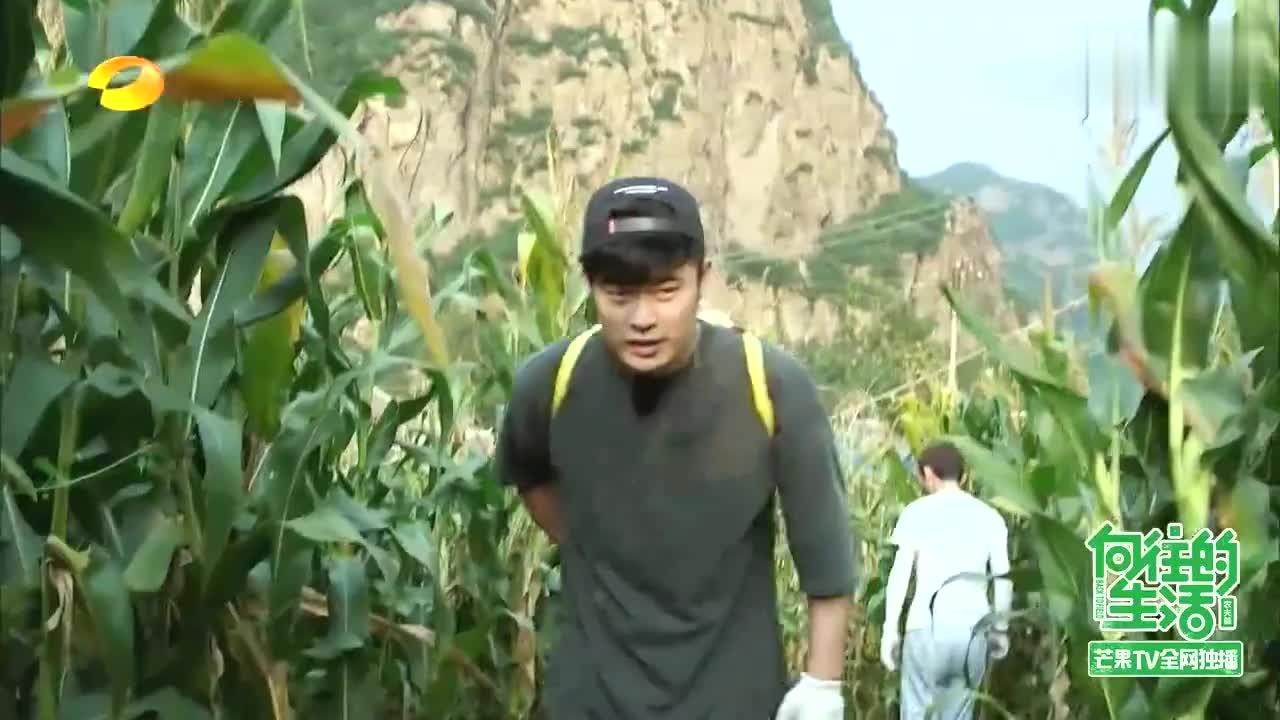 陈赫加入何炅玉米队,成劳模掰1215颗玉米,简直太厉害了