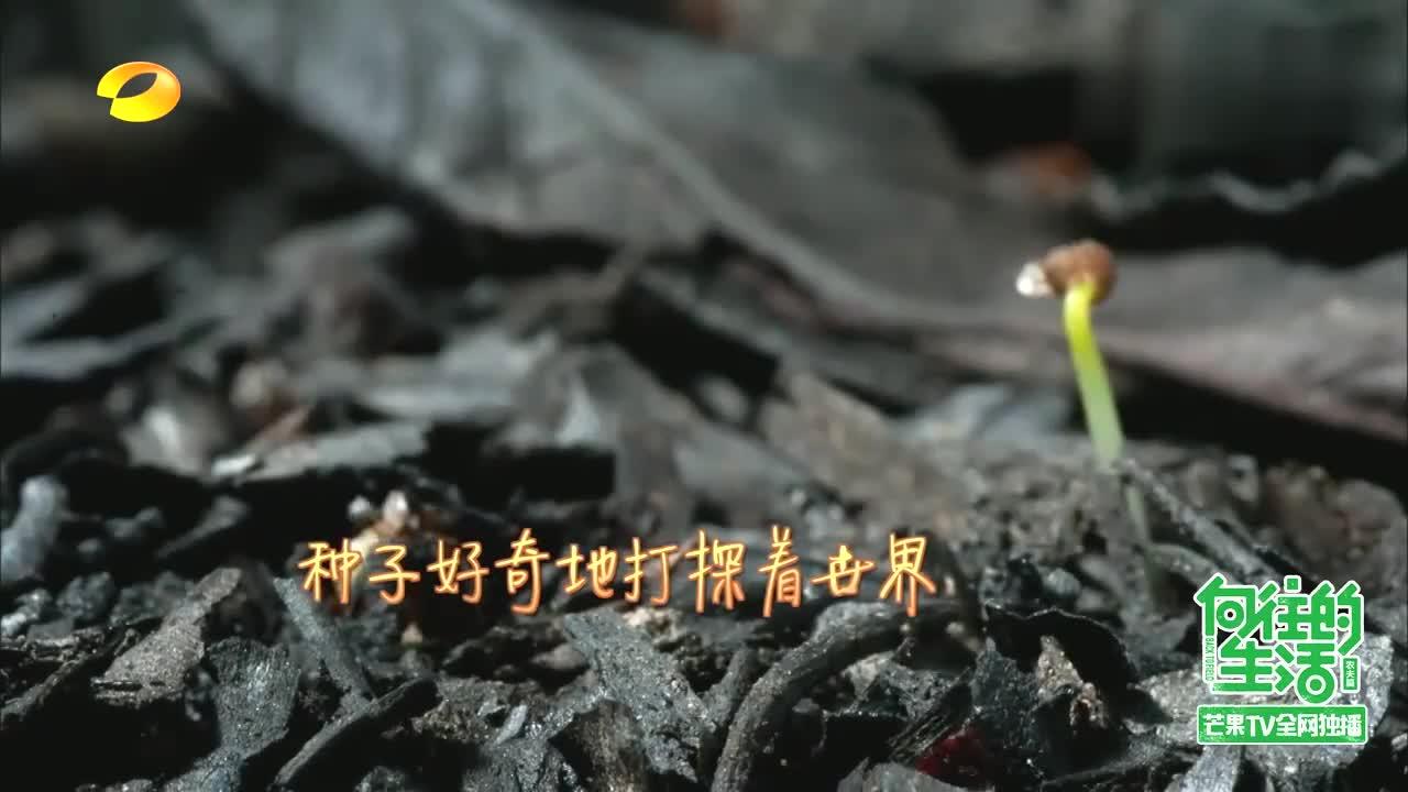 """黄磊何炅上演现代版""""归园田居"""",回归农村,去过体验向往的生活"""