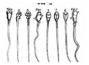 奇怪的知识增加了|精子畸形是咋回事儿?