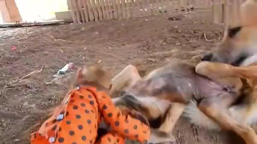 小猴子太贱了一天到晚缠着狗子打架狗子看见小猴就一脸的厌恶