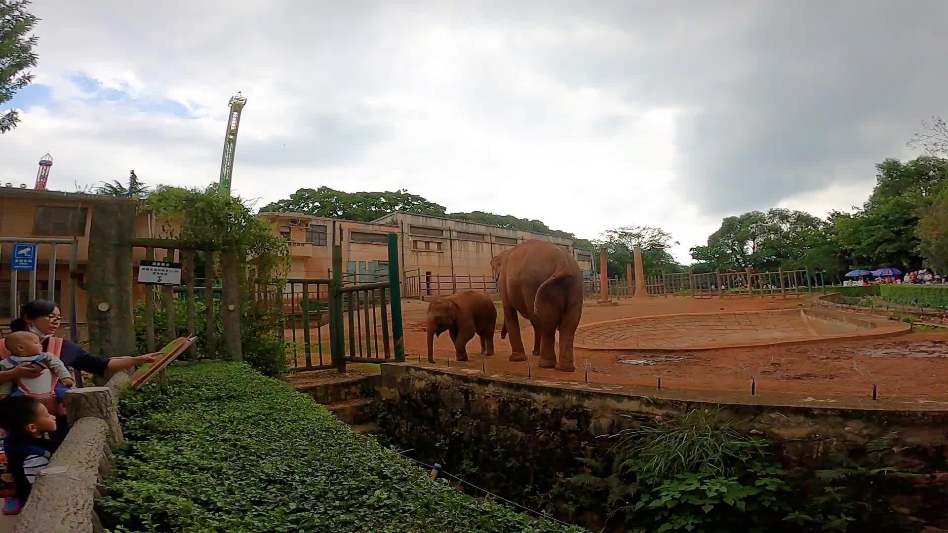 动物界的饭桶一天要吃 0.1吨食物,大象太能吃了,一起来感受下!