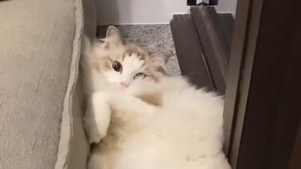 傻布偶猫,给皮卡丘腾地方睡,自己睡沙发缝!