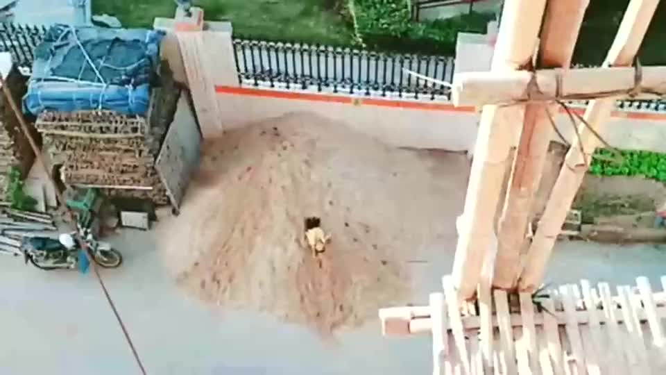 一个在沙堆一个在水潭,从小就学了一身匍匐前进的本领