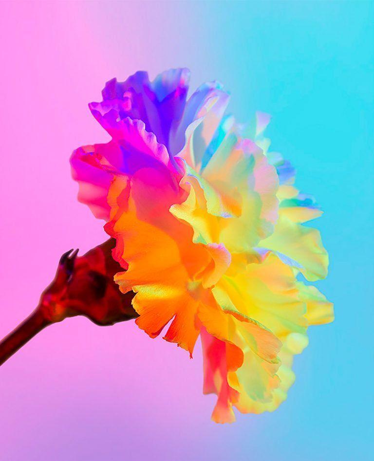 巴黎的平面设计师Claire Boscher与华为合作研究花卉主题摄影