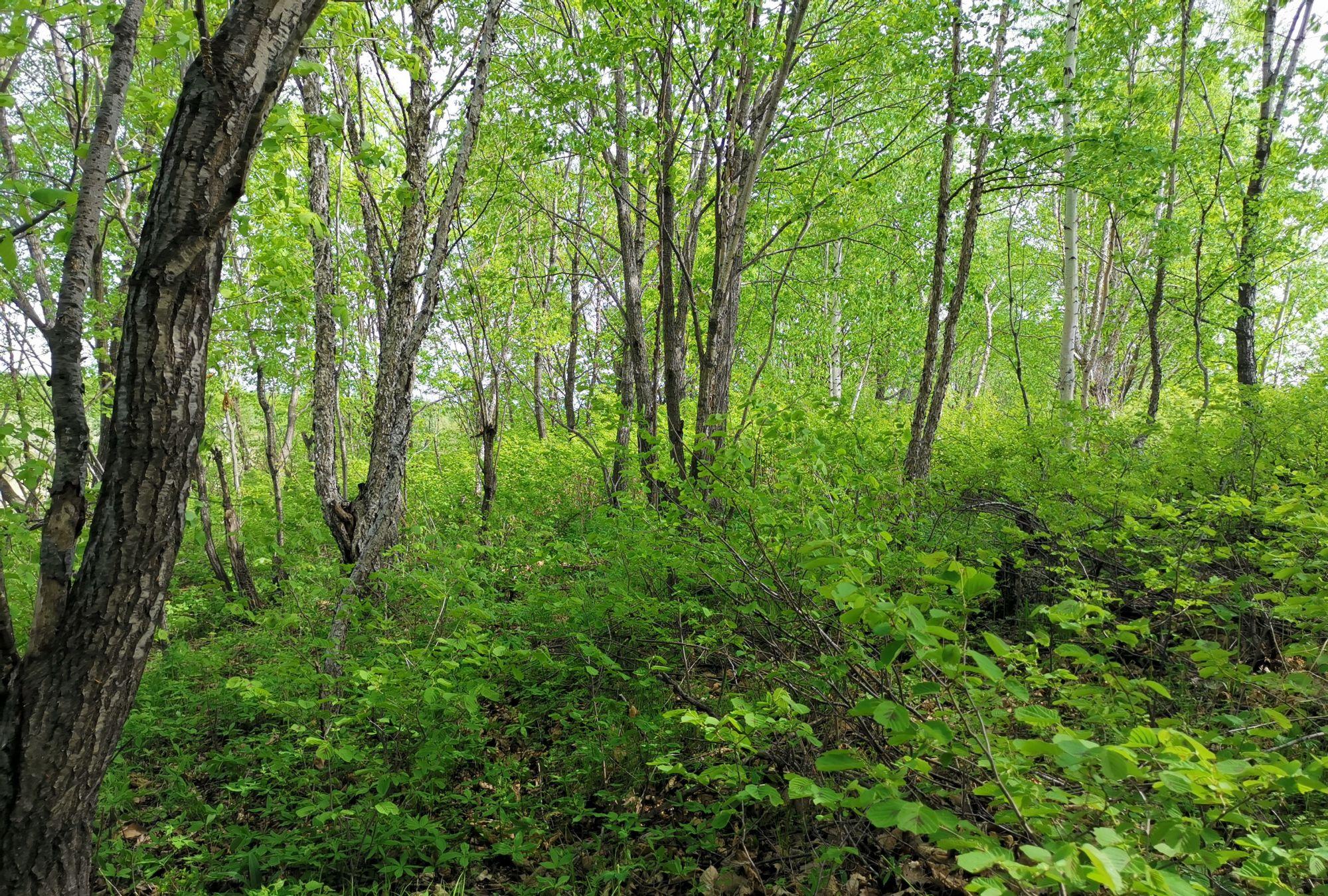 树林里面的山野菜,随处可见,随处可採