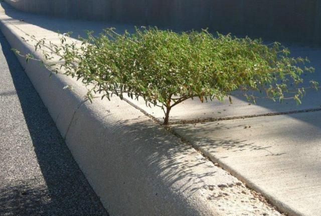 当人类消失之际,植物将是地球上最顽强的主人