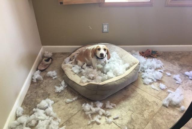 当萌萌哒的宠物们犯了错误,我只能选择原谅它们