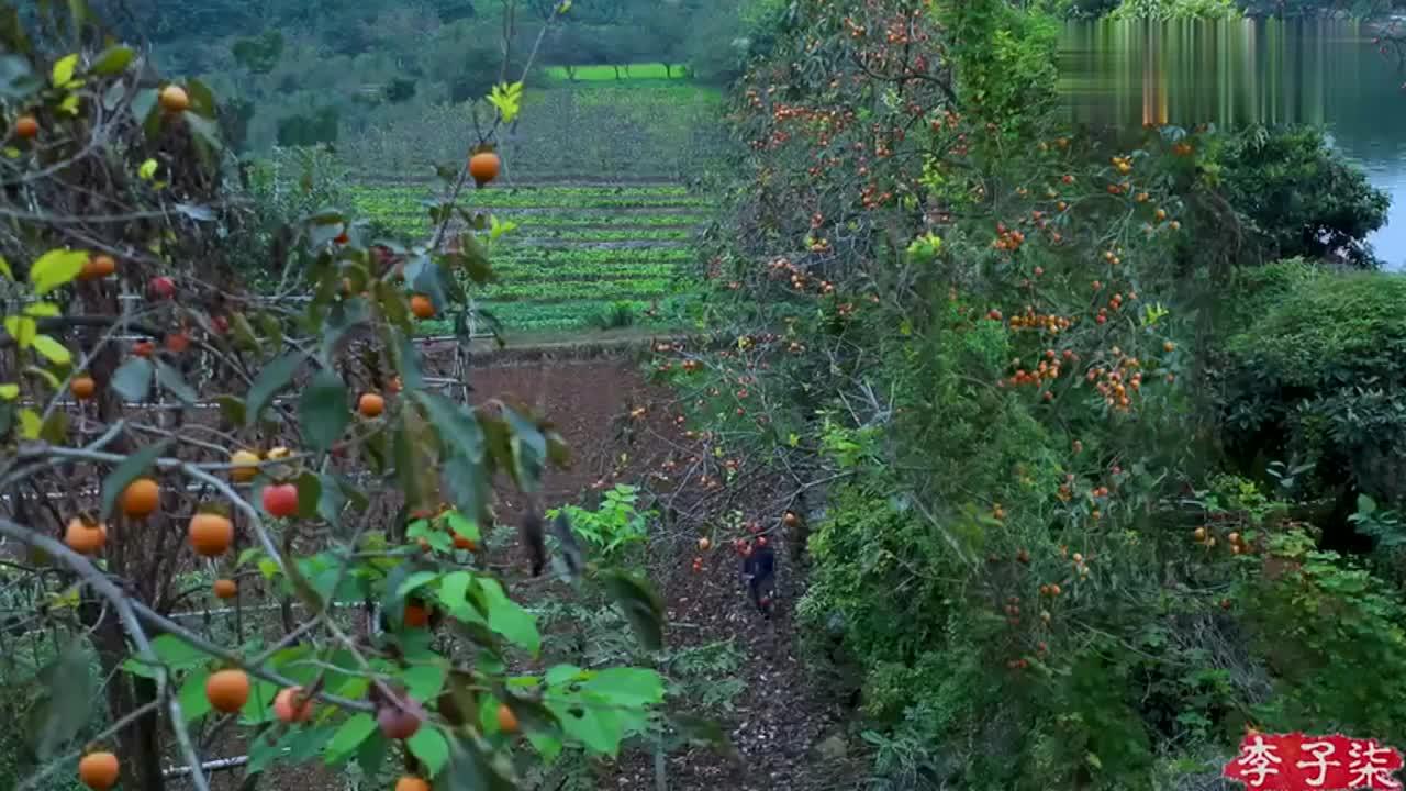 女神李子柒行走在这漫山遍野采下一树红妆预备些冬天的密食