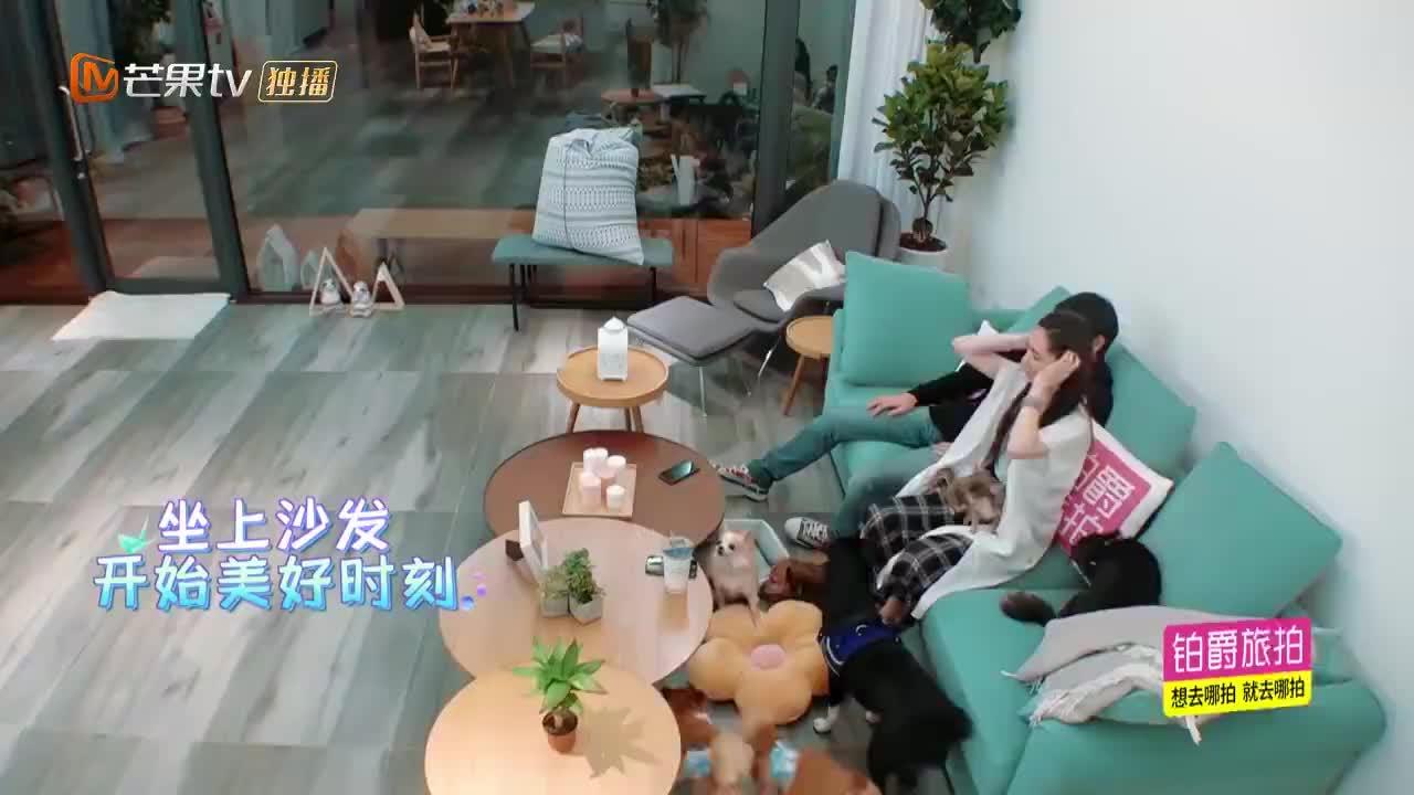 向佐郭碧婷还没结婚,就开始规划以后的小孩,张绍刚:是有多着急