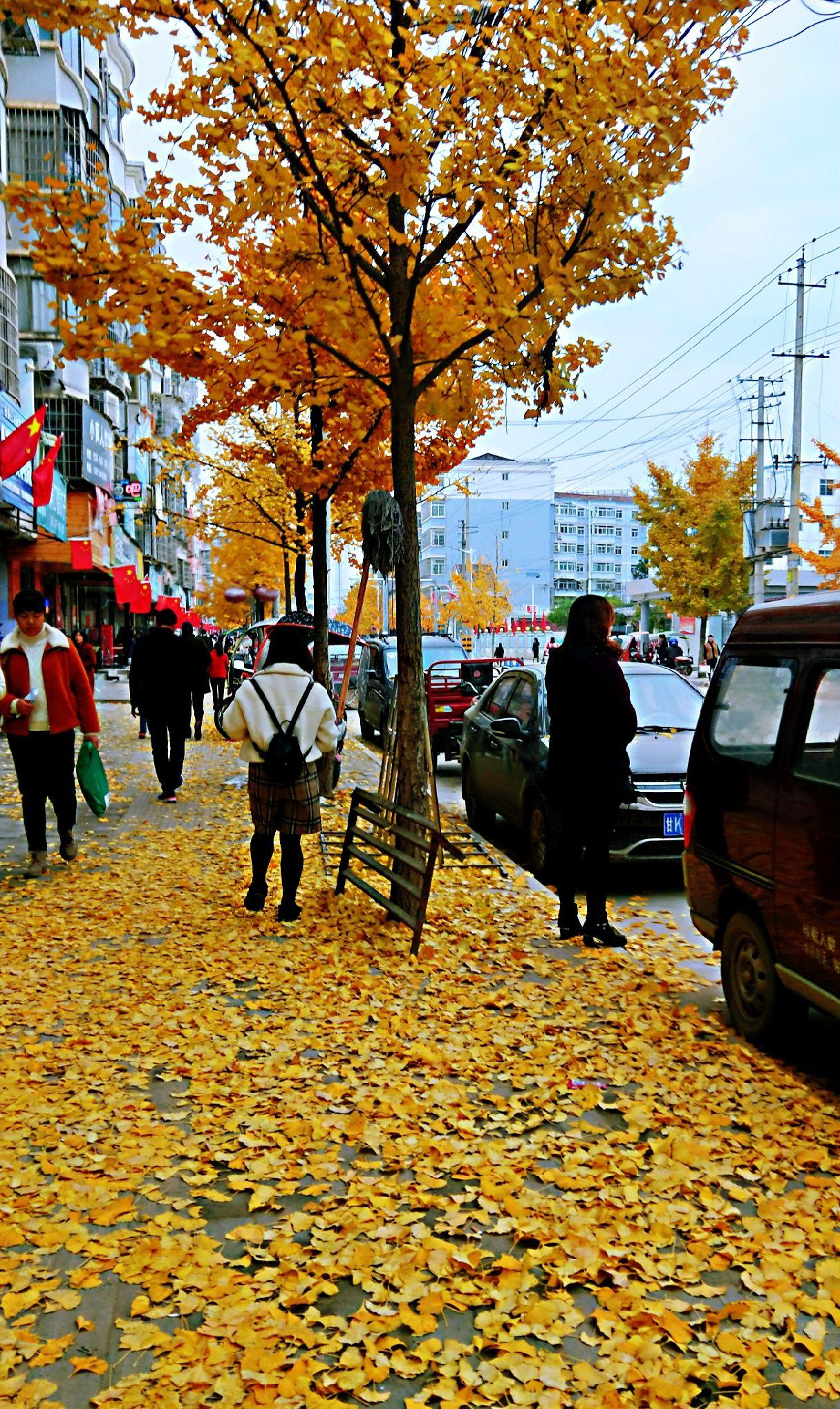 美丽的一中校园古老的银杏村落,满地金黄的落叶