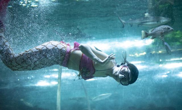 """她们是谁家宝贝女儿?重庆海洋馆的3位""""美人"""",工作是与鲨共舞"""