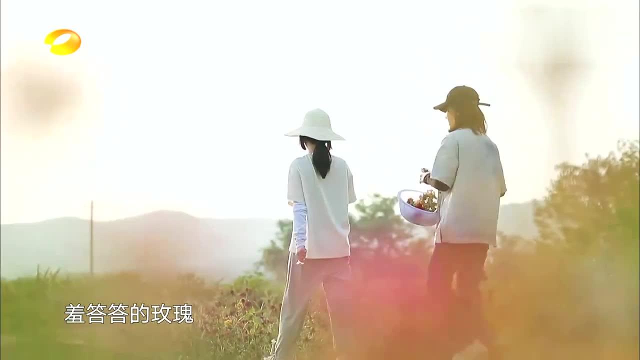 向往4:谭松韵张子枫姐妹组,夕阳下采花,简直是一幅画太美了!