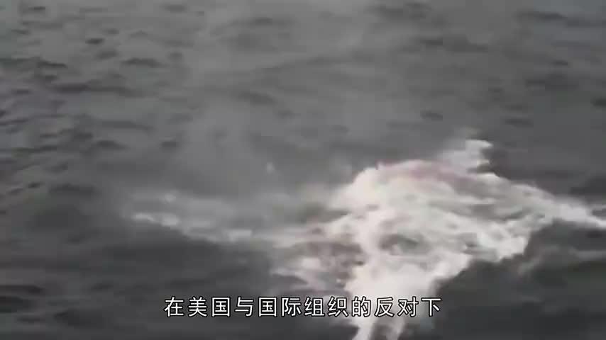 不顾美国反对日本毅然退出一国际组织重启全球禁止的商业捕鲸