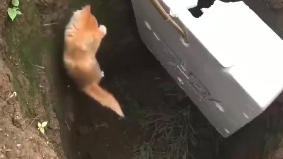 枯井掉了一只小猫,邻居都不愿意救,这种小野猫太多了