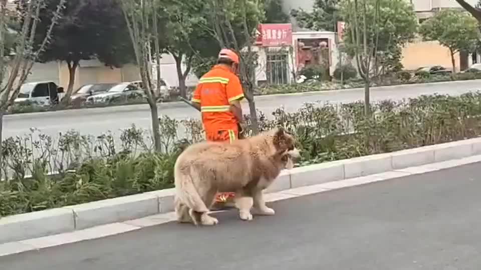 这傻狗跟了环卫大叔两条街,还没发现认错人!