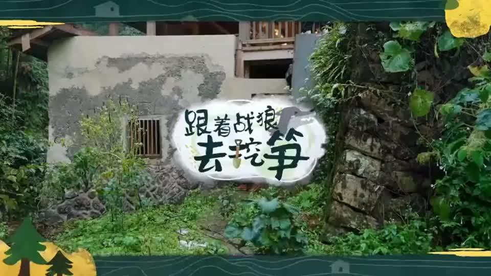 幸福三重奏3:吴京雨中上山挖笋~心疼跟拍的摄影师