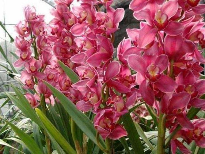 """4种""""招财纳福""""的花,丢盆里猛长,开花多又美,一整年开花!"""