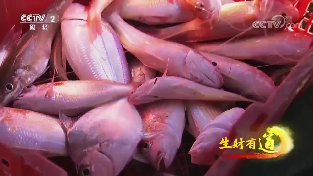 金黄色泽的香煎金线鱼,鲜香至极让人简直欲罢不能丨生财有道