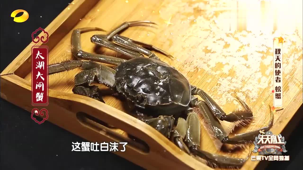 安以轩不愧是蟹后,看一眼就知道大闸蟹几两重,汪涵都惊了!