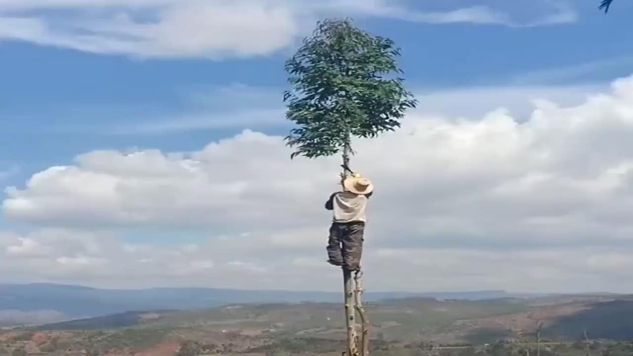 你大爷还是你大爷砍树都不一样这是天上的树吗