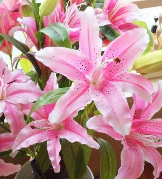 3种花高贵优雅,沾土就活,开花又大又艳,比牡丹美