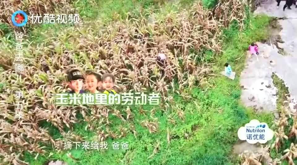 爸爸去哪儿:吴家采摘流水线井井有条,max搬运玉米超卖力