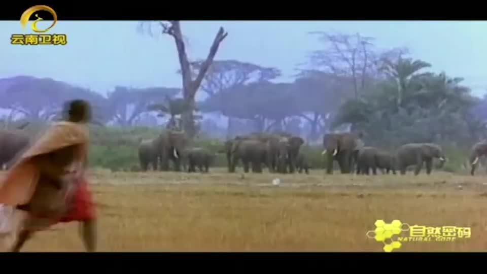 大象突然兽性大发,将矛头对准饲养员,将其残忍地杀害了!