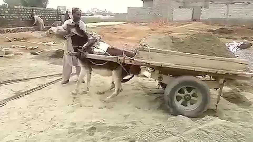 主人给驴卸货,驴:下次再这样,老子不干了!看完不禁笑出声
