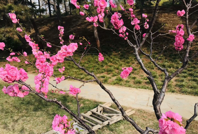 春暖花开时,万物复苏,生机勃勃一片春天景象