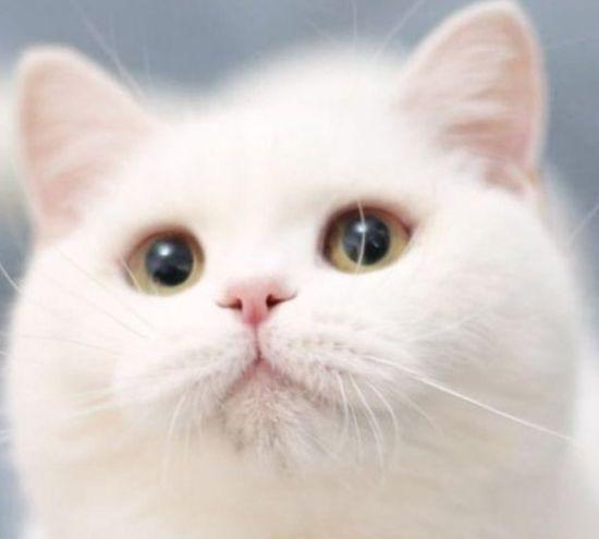 喜欢玩耍的猫,如同行走的人民币,喜欢陪着主人