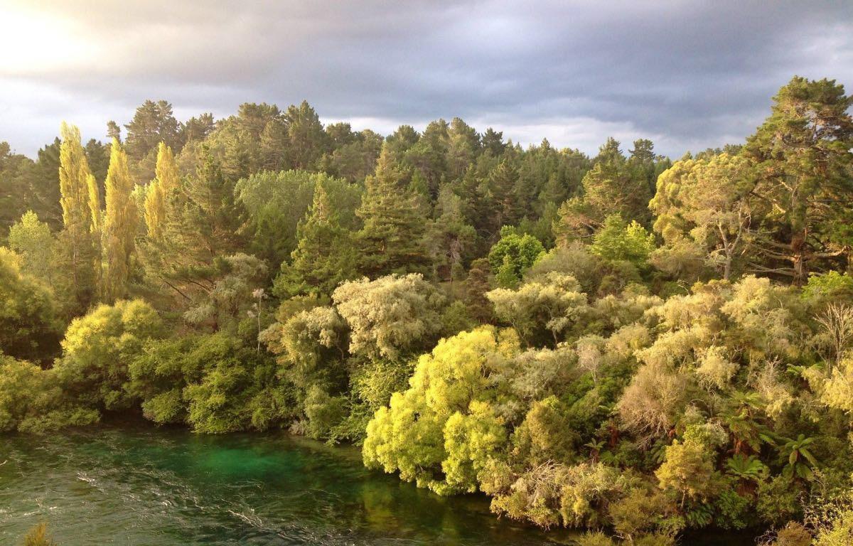 游览 新西兰 陶波 怀卡托河 金秋美景