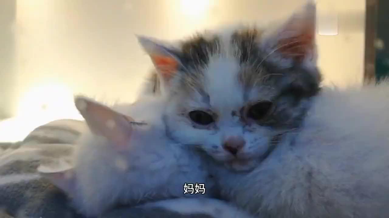 超级可爱的小奶猫