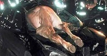 """世上最""""奇葩""""的车祸:图1就跪了,看完笑出了猪叫声!"""