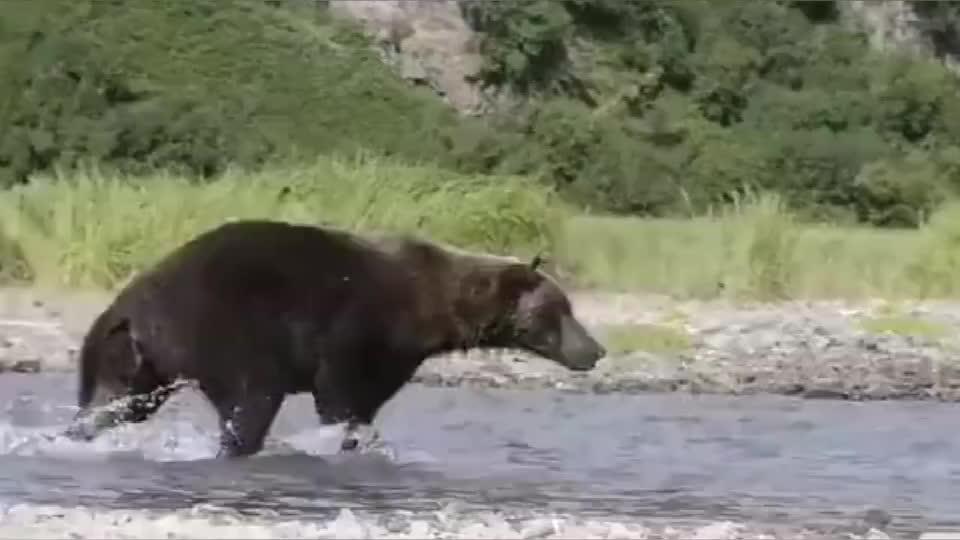事实证明鱼和熊掌可以兼得