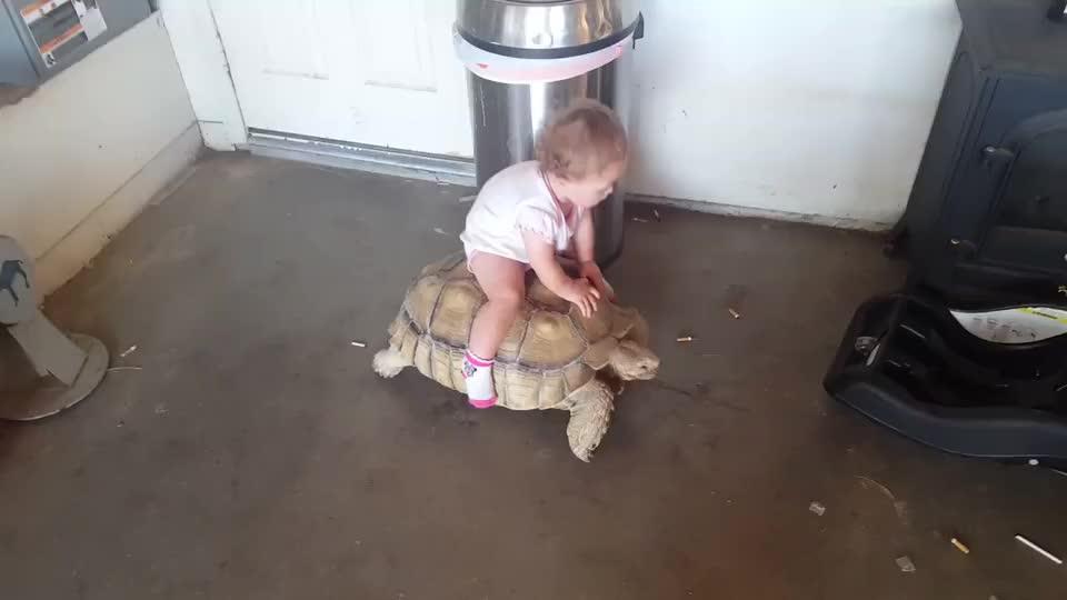 自从爸爸买了只乌龟当宠物,宝宝整天骑在它背上,都不想走路了!